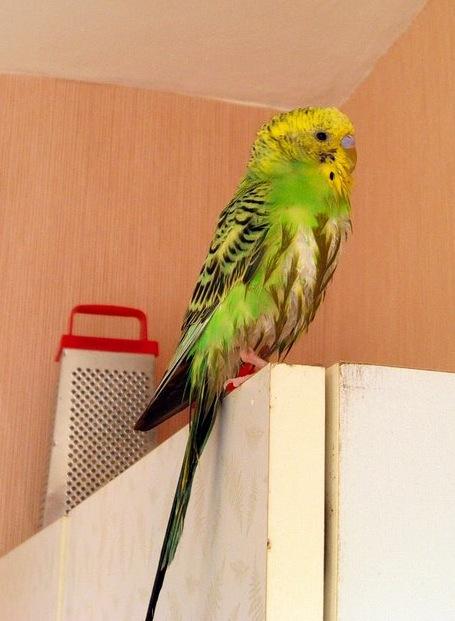 Мокрый попугай